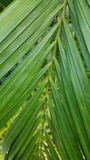 Largo y verde Foto de archivo libre de regalías