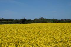 Largura amarela Imagens de Stock