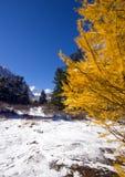 Larice. Vista di inverno Immagine Stock