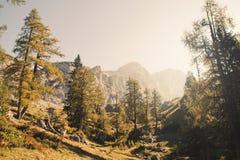 Larici della montagna Fotografia Stock Libera da Diritti