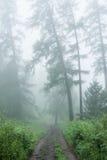 Lariks in de mist Royalty-vrije Stock Foto