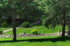 Lariks met grote boomstammen in het park Het Concept van het landschapsontwerp Stock Fotografie