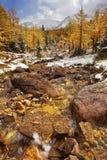 Lariksbomen in daling na eerste sneeuw, Banff NP, Canada royalty-vrije stock afbeelding