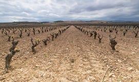 lariojaspain wineyard Arkivfoto