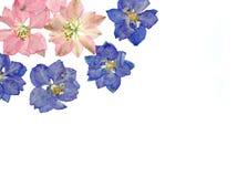 Larkspur blüht Hintergrund Lizenzfreie Stockbilder
