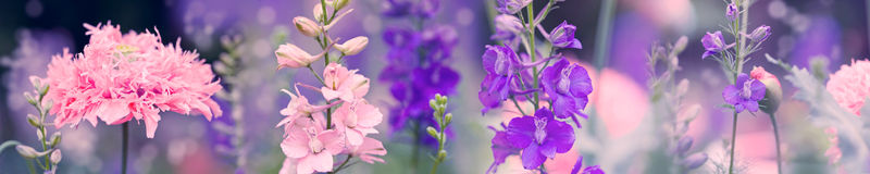 Larkspur - Delfinium flowers with poppy Royalty Free Stock Photos