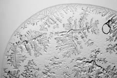 Larmes vues au microscope photos libres de droits