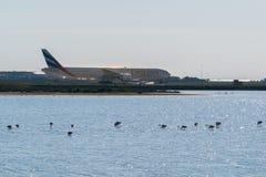 Larnaka, Cypr Europa, Jan, - 29, 2018, samolot w Larnaka lotnisku międzynarodowym i słone jezioro z niektóre flamingami, Zdjęcie Royalty Free