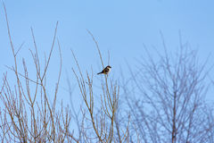 Larry Bird zdjęcie royalty free