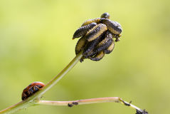 larva royaltyfri fotografi