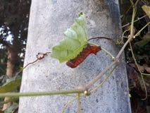 larva Imagen de archivo libre de regalías