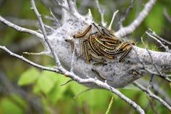 larva arkivfoto