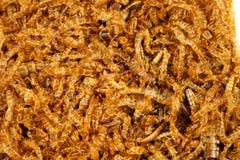 A larva de farinha inoperante Fotografia de Stock Royalty Free