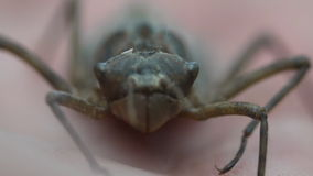 Larva of a dragonfly on a palm stock video footage