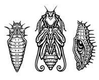 Larva fantastica di un insetto illustrazione vettoriale
