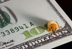 Larva nibble money, finance crisis concept Royalty Free Stock Images