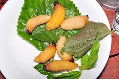Larva roja del gorgojo de la palma Foto de archivo
