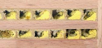 Larva salvaje de la abeja en su colmena Imagenes de archivo