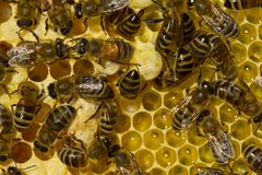Plot of summer life of bees Stock Image