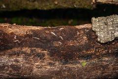 Larvae on tree Royalty Free Stock Image