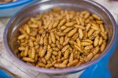 Larvas comestibles fotos de archivo
