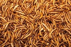 Larvas de farinha Foto de Stock Royalty Free