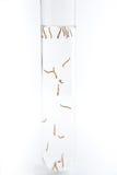 Larvas do mosquito em um tubo de ensaio imagem de stock royalty free