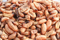 Larvas fritadas da larva Fotos de Stock