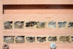 Larvas salvajes de los bicornis de Osmia de la abeja en hotel del insecto mire en nes del aa Foto de archivo libre de regalías