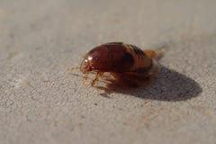 Larve d'insecte de Brown Photos libres de droits