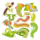 Larven för för Caterpillar vektorleafworm eller gräsplan och lövrikt avmaskar i naturillustrationuppsättning av spanworm och fall royaltyfri illustrationer