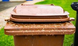 larves photos libres de droits