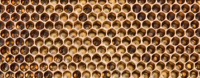 Larves le contrat à terme des abeilles photographie stock