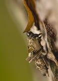larw psychidae zdjęcie stock