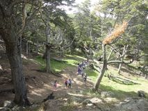 Lasów drzew i rośliien scurcion Obraz Stock
