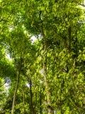 Lasów drzewa w lecie Fotografia Royalty Free