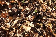 Lasów liście Zdjęcie Stock