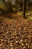 Lasów liście Fotografia Royalty Free