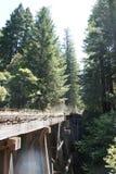 lasów redwood kalifornii Obrazy Stock