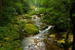 Lasów strumienie Obrazy Royalty Free