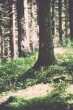 lasów szczegóły w wiośnie - rocznika skutek Obraz Stock