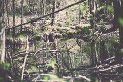 lasów szczegóły w wiośnie - rocznika skutek Fotografia Royalty Free