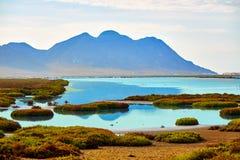 Las盐沼在Cabo de加塔角阿尔梅里雅 免版税图库摄影