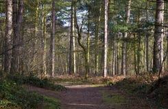 Las ścieżka Zdjęcie Royalty Free
