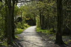Las ścieżka w wiośnie w Burnley Anglia Zdjęcie Stock