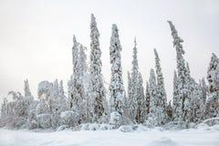 las śnieżny Obrazy Royalty Free