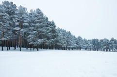 las śnieżny Zdjęcia Royalty Free