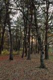 Las & światło Fotografia Royalty Free