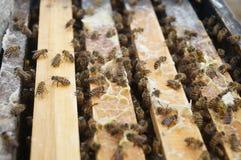 Las abejas Foto de archivo