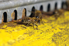 Las abejas acercan a una colmena Foto de archivo libre de regalías